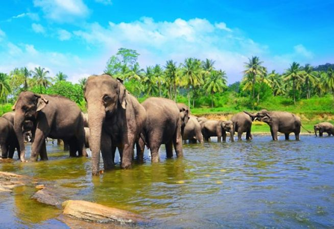 Luxury Holidays to Sri Lanka with Classic Resorts